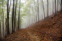神秘的早晨有雾的森林风景 库存图片