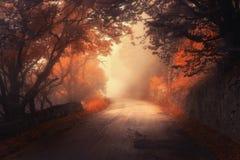 神秘的有路的秋天红色森林在雾 免版税库存图片