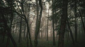 神秘的有雾的森林 免版税库存照片