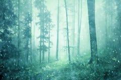 神秘的有雾的童话多雪的森林 免版税库存图片