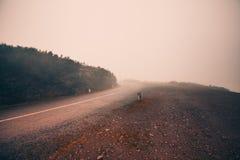 神秘的有雾的路 免版税库存照片