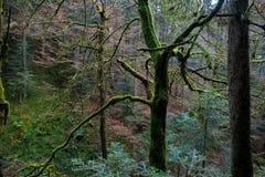 神秘的树在森林里 免版税库存图片
