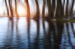 神秘的树 反射俄国结构树水的6月横向 免版税库存照片