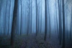 神秘的森林每有雾的天 免版税库存照片