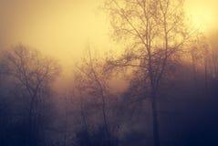 神秘的森林每有雾的天 免版税库存图片