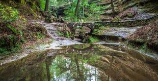 神秘的森林道路 库存图片
