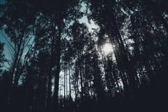 神秘的森林,太阳光芒输入 库存图片