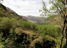 神秘的森林,苏格兰高地 免版税库存照片