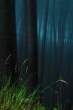 神秘的森林 图库摄影