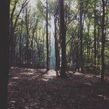 神秘的森林 库存照片