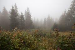 神秘的深雾在森林里 库存照片