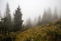 神秘的深雾在森林里 库存图片