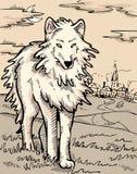 神秘的狼 免版税图库摄影
