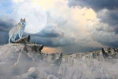 神秘的狼 库存照片