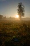 神秘的瑞典早晨 库存照片