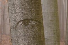 神秘的眼睛森林 免版税库存图片