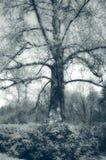 神秘的结构树 图库摄影