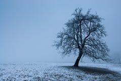 神秘的结构树 库存照片