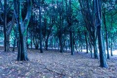 神秘的蓝色和冷的森林 库存照片