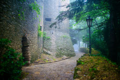 神秘的蓝色和绿色童话森林 免版税库存照片