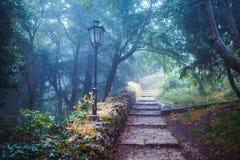 神秘的蓝色和绿色童话森林 库存图片