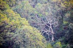 神秘的轻的树干 库存照片