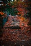 神秘的道路在加拿大的森林里 免版税图库摄影