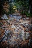 神秘的道路在森林里 图库摄影