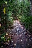 神秘的道路在森林里 库存图片