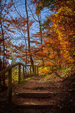 神秘的道路在秋季森林里 库存图片