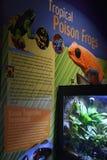 神秘的水族馆在康涅狄格 免版税图库摄影