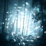 神秘的绿松石萤火虫森林风景 免版税图库摄影