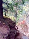 神秘的结构树 免版税库存照片