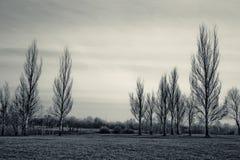神秘的结构树 免版税图库摄影