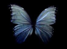 神秘的蝴蝶 免版税库存图片