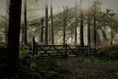 神秘的forrest,不可思议的光在forrest的秋天 免版税库存图片