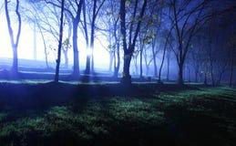 神秘蓝色的森林 图库摄影