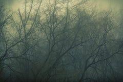神秘雾在森林里 库存图片