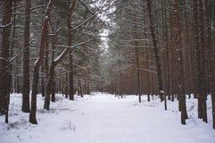 神色到冬天森林里 免版税库存图片