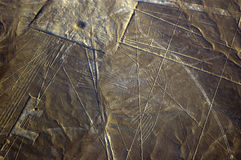 神鹰排行nazca秘鲁 免版税库存照片