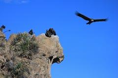 神鹰飞行,一些开会 免版税图库摄影