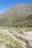 神鹰,塔夫拉达・德乌玛瓦卡, Jujuy,阿根廷 免版税图库摄影