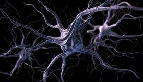 神经元 免版税库存照片