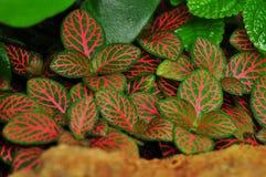 神经植物 免版税库存图片
