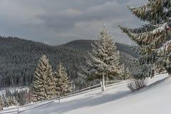 神仙的森林冬天 免版税库存图片
