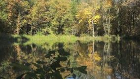 神仙的森林湖 影视素材