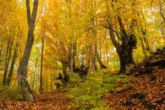 神仙的森林秋天风景  库存图片