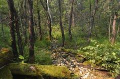 神仙的森林 免版税库存图片