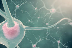 神经系统的神经元与作用弄脏和光的 3d例证神经细胞 免版税图库摄影