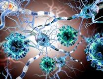 攻击神经细胞的病毒 库存照片
